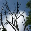 Play Jigsaw: Leafless Branches Online